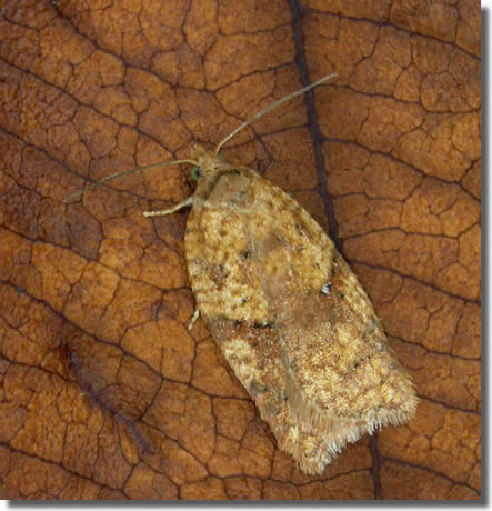 Ulverscroft NR, Leics, 04/12/2004, MV Light Trap , Keith Tailby (c) Keith Tailby 2004