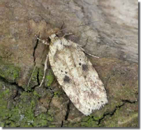 Ravenstone, Leics, 26/04/2004, MV Light Trap , Keith Tailby (c) Keith Tailby 2004
