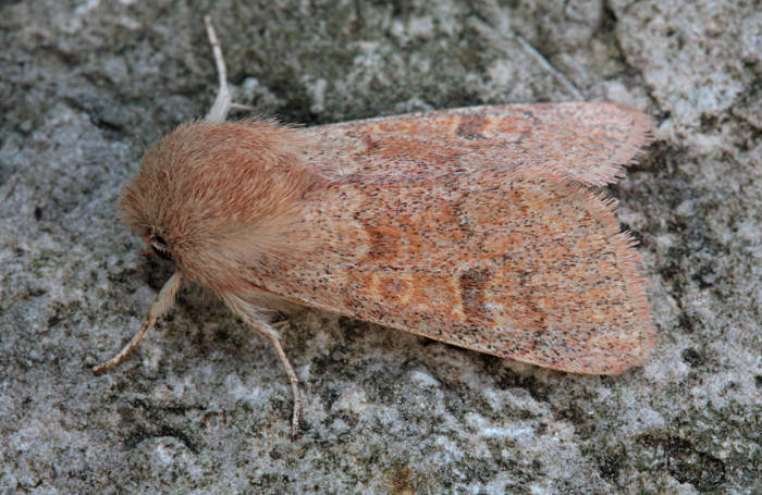 Weston Colley, Hampshire VC12, 08/04/2011, MV Light Trap, Dave Green (c) Mike Wall 2011