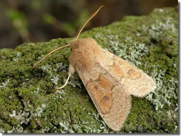 Salcey Forest, Northants, 11/04/2004, MV Light Trap, Keith Tailby (c) Keith Tailby 2004