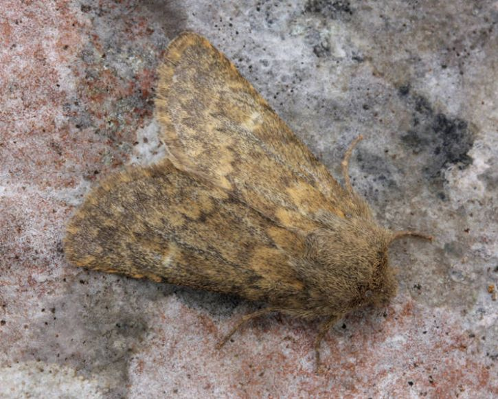Great Asby Scar NNR, Cumbria, 26/09/2012, MV Light Trap, David Green (c) David Green 2012