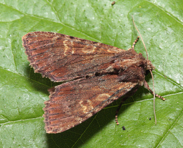 Morgaston Wood, Hampshire, 06/05/2011, MV Light, Mike Wall (c) Mike Wall 2011
