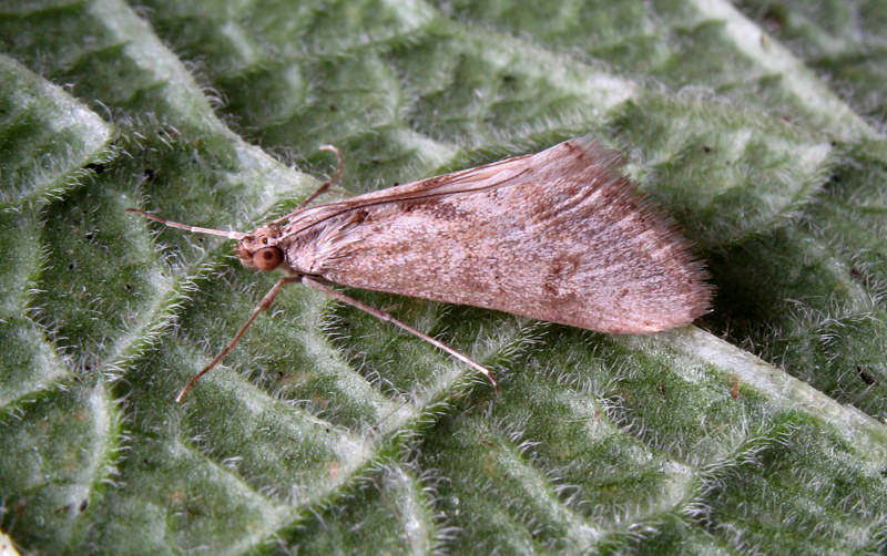 Funtley, Hampshire VC11, 27/12/2015, MV Light Trap, Maurice Opie (c) Maurice Opie