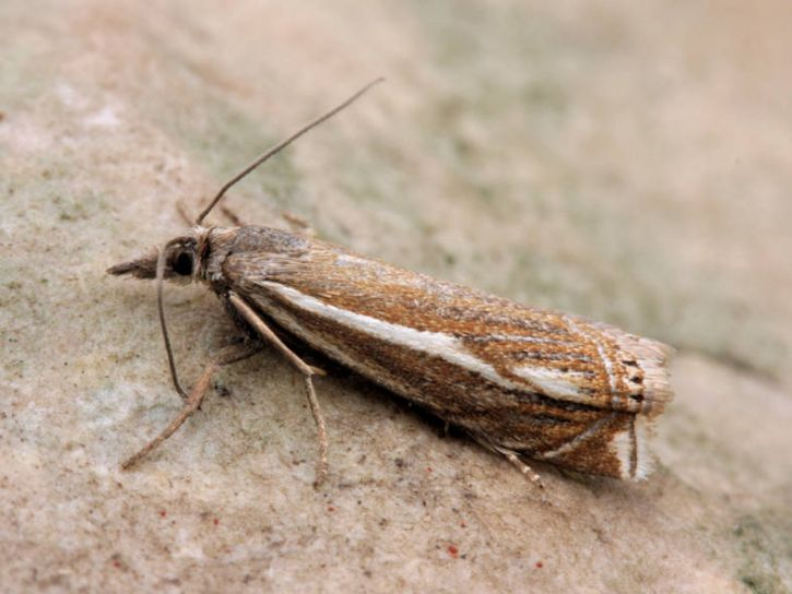 Great Asby Scar NNR, Cumbria, 25/07/2012, MV Light Trap, David Green (c) David Green 2012