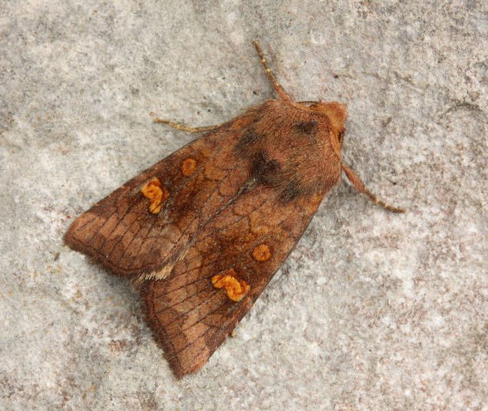 Great Asby Scar NNR, Cumbria, 29/08/2012, MV Light Trap, David Green (c) David Green 2012