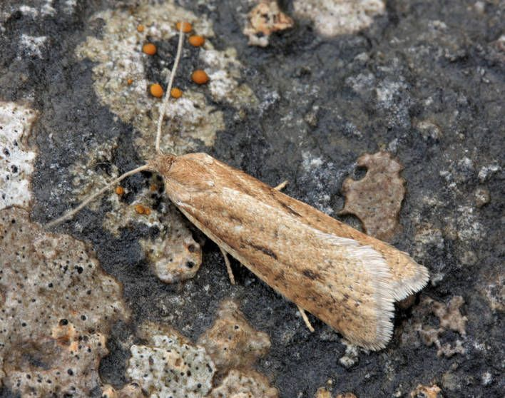 Great Asby Scar NNR, Cumbria, 05/08/2012, MV Light Trap, David Green (c) David Green 2012
