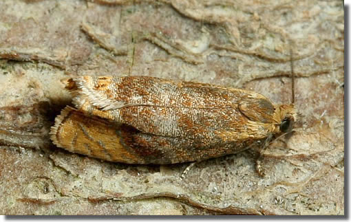 Holmsley dismantled railway line, New Forest, Hampshire VC11, 20/05/2006, MV Light Trap, Dave Green (c) David G Green 2006