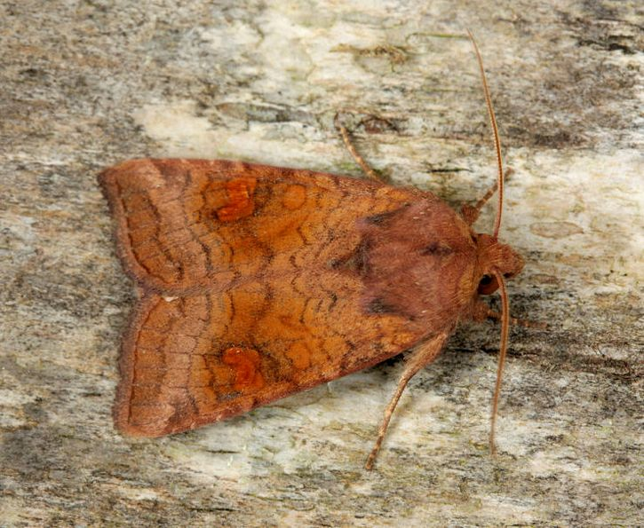 Ellerside Moss, Cumbria, 12/08/2011, MV Light Trap, Dave Green (c) Dave Green 2011