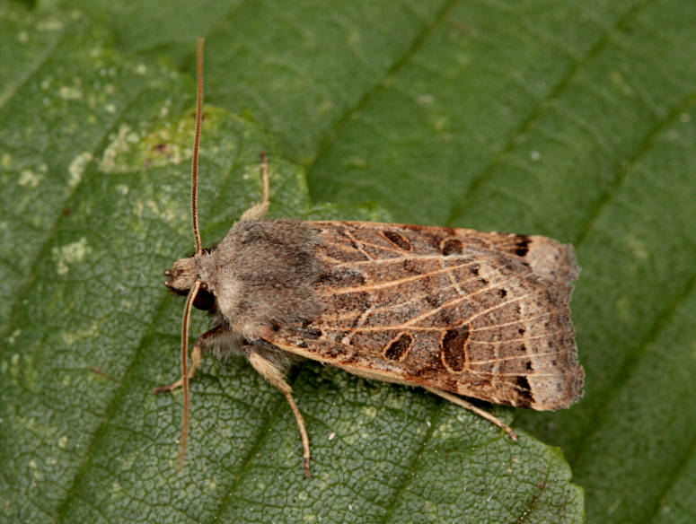 Basingstoke, Hampshire VC12, 25/09/2014, MV Light Trap, Mike Wall (c) Mike Wall