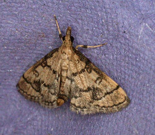 Bulgaria, 06/07/2007, MV Light Trap, Peter Davey, Tim Norriss, Mike Wall, Richard Coomber et al (c) Mike Wall 2007
