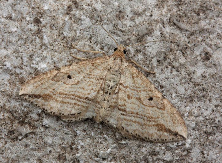 Weston Colley, Hampshire VC12, 13/08/2010, MV Light Trap, David G Green (c) David G Green 2010