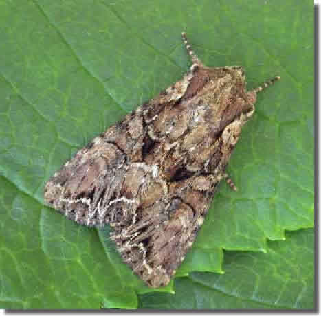 Charnwood Lodge NR, Leics, 10/05/2004, MV Light Trap , Keith Tailby (c) Keith Tailby 2004