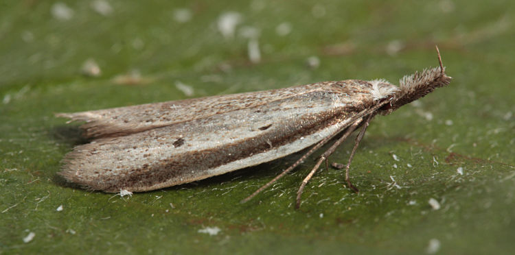Magdalen Hill Down, Hampshire, 13/05/2011, MV Light, Mike Wall (c) Mike Wall 2011
