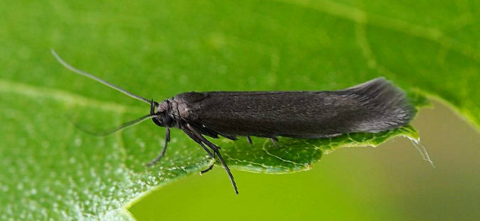Oxshott Heath, Surrey, 16/06/2014, MV Light Trap, Billy Dykes (c) Billy Dykes 2014
