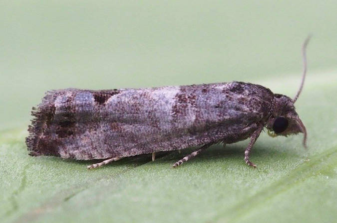 Surrey, 27/06/2014, MV Light Trap, Billy Dykes (c) Billy Dykes 2014
