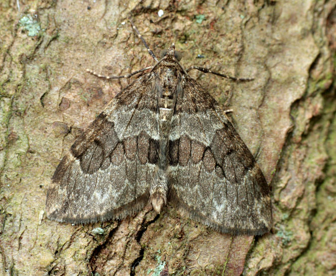 Basingstoke, Hampshire VC12, 22/04/2011, MV Light Trap, Mike Wall (c) Mike Wall 2011