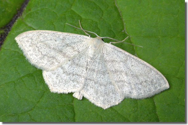 Covert Wood, Kent, 07/07/2006, MV Light Trap , Keith Tailby (c) Keith Tailby 2006