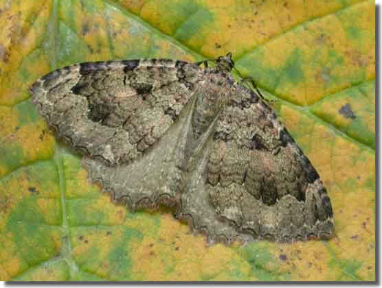 Pickworth Great Wood, Rutland, 20/11/2003, MV Light Trap , Keith Tailby (c) Keith Tailby 2003