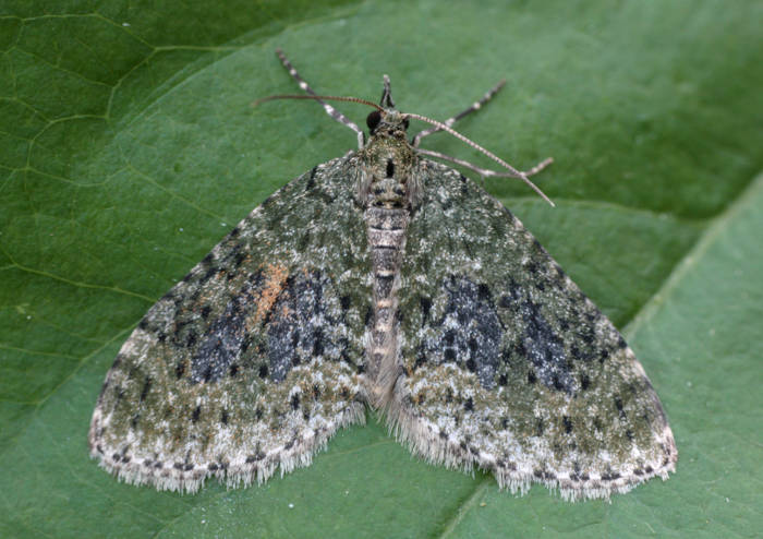 Basingstoke, Hampshire VC12, 14/04/2011, MV Light Trap, Mike Wall (c) Mike Wall 2011