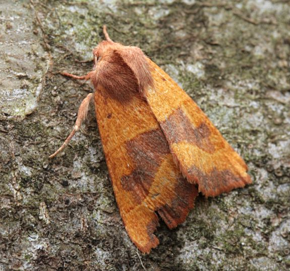 Basingstoke, Hampshire VC12, 17/09/2008, MV Light Trap, Mike Wall (c) Mike Wall 2008