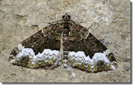 nr. Rockbourne, Hampshire, 15/07/2002, MV light trap, Dave Green (c) David G Green 2004