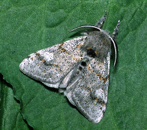 Gore Heath, Dorset, 12/07/1999, MV light trap, Dave Green (c) David G Green 2004