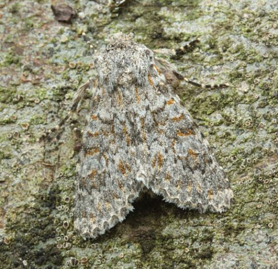 Basingstoke, Hampshire VC12, 23/09/2008, MV Light Trap, Mike Wall (c) Mike Wall 2008