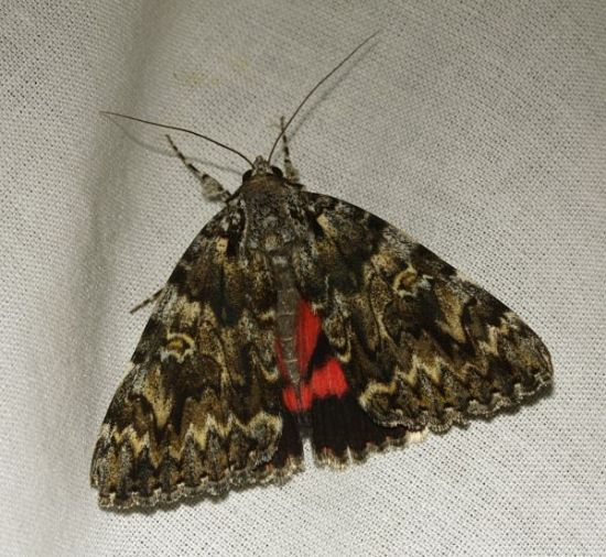 Ladycross Inclosure, New Forest, Hampshire VC11, 27/07/2008, MV Light Trap, Mike Wall, Dave Green et al (c) Mike Wall 2008