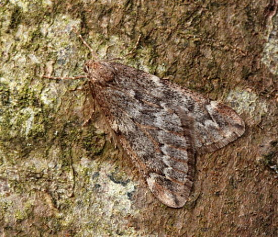 Basingstoke, Hampshire VC12, 16/03/2009, MV Light Trap, Mike Wall (c) Mike Wall 2009