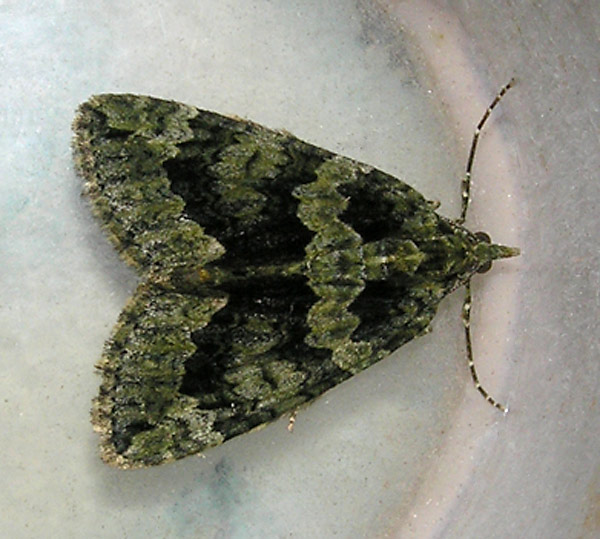 Bonchurch, Isle of Wight VC10, 15/11/2008, MV Light Trap, James Halsey (c) James Halsey 2008