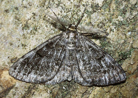 Rewell Wood, West Sussex, 24/06/2002, MV light trap, Dave Green (c) David G Green 2004